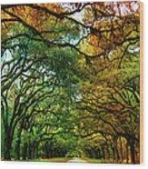 Wormsloe Plantation Wood Print