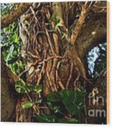 Wrapped In Vines Wood Print by Claudette Bujold-Poirier