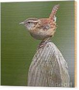 Wren Chirping Wood Print
