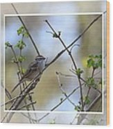 Wren In Spring 2013 Wood Print