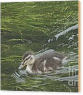Wye Dale Duckling Wood Print