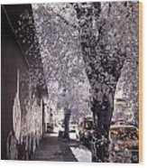 Wynwood Treet Shadow Wood Print