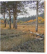 Wyoming Gold Wood Print