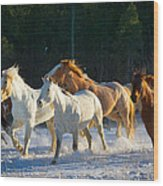Wyoming Horses Wood Print
