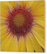 Wyoming Sunflower Wood Print