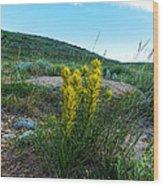 Wyoming Wildflowers Indian Paintflowers Wood Print
