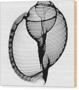 X-ray Of Scotch Bonnet Wood Print