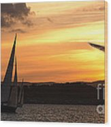 Yacht And Seagull Sunset Wood Print