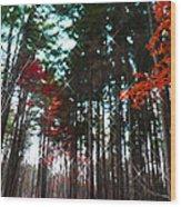Yaddo Sparkle Wood Print