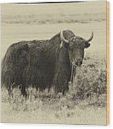 Yaks...the Official Animal Of Tibet Wood Print