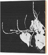 Yang Wood Print