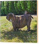 Yard King Wood Print