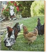 Yard Party With The Chickens Wood Print
