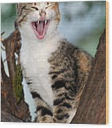 Yawning Cat Wood Print