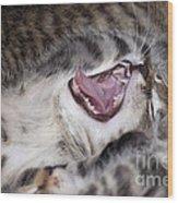 Yawning Kitten Wood Print