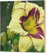 Yawning Lily Wood Print
