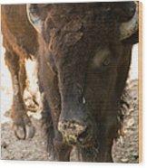 Waco Texas Buffalo Nose Drip Wood Print