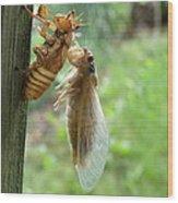 Year Of The Cicada Wood Print