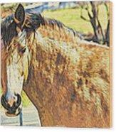 Yeller Horse Wood Print