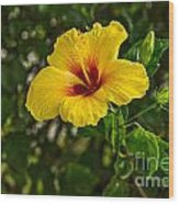 Yellow - Beautiful Hibiscus Flowers In Bloom On The Island Of Maui. Wood Print