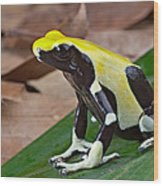 Yellow And Black Poison Dart Frog Wood Print