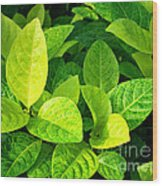 Yellow And Green Leaves Wood Print
