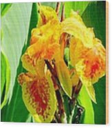 Yellow And Orange Canna Lily Wood Print