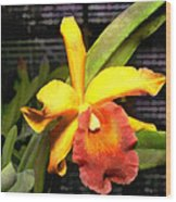 Yellow And Orange Cattleya In The Hothouse Wood Print