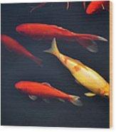 Yellow And Orange Koi Swimming Wood Print