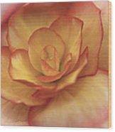 Yellow And Orange Rose Wood Print