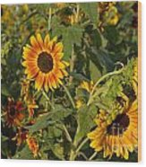 Yellow And Orange Sunflowers Wood Print