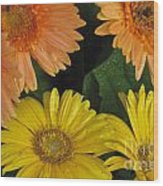 Yellow And Peach Wood Print