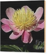 Yellow And Pink Peony Wood Print