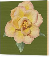 Yellow And Pink Rose Wood Print