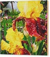 Yellow And Purple Iris Wood Print