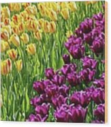 Yellow And Purple Tulips Wood Print