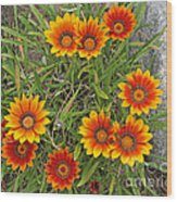 Yellow And Red Daisy Flower Wood Print