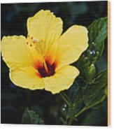 Yellow And Red Hibiscus Wood Print