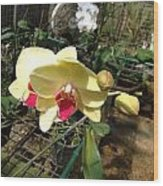 Yellow And Red Orchid Wood Print
