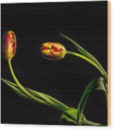 Yellow And Red Tulips On Black - Reaching Out Wood Print