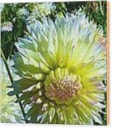 Yellow And White Dahlia Flowers Wood Print