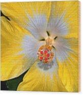 Yellow And White Hibiscus Wood Print