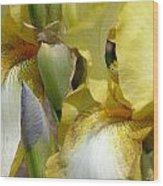 Yellow And White Iris Wood Print