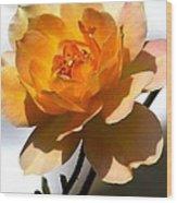 Yellow And White Rose Wood Print