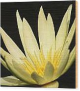 Yellow And Yellow Waterlily...   # Wood Print