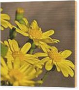 Yellow Arfaj Flowers Wood Print