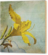 Yellow Asiatic Lilly Iv Wood Print