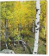 Yellow Aspens Wood Print