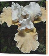 Yellow Bearded Iris Wood Print