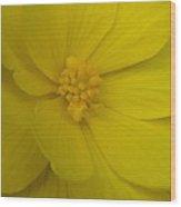 Yellow Begonia Wood Print
